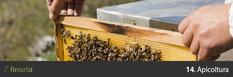 attività redditizie apicoltura