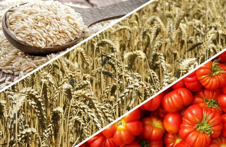 Investire agroalimentare Borsa